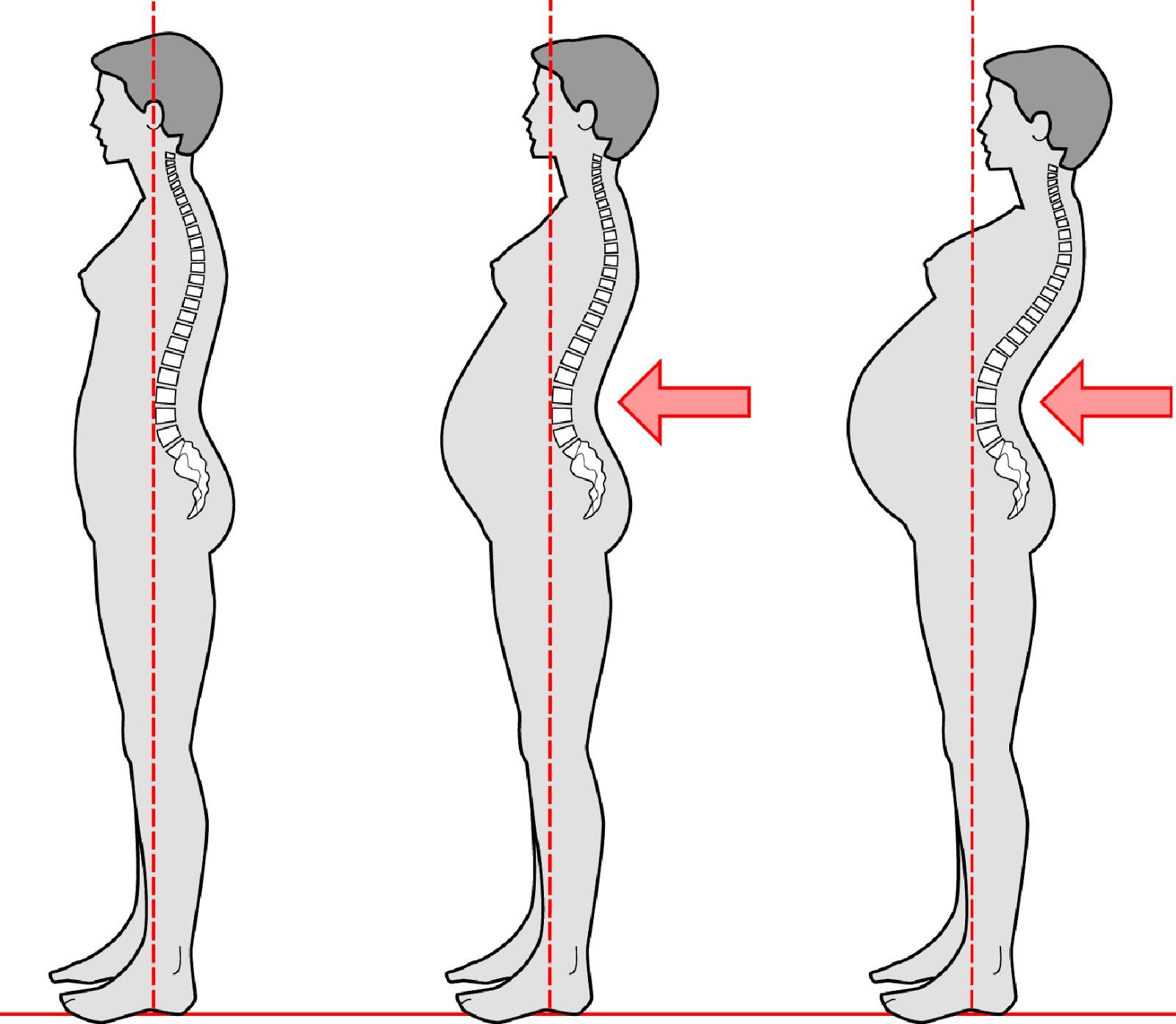 adaptacion musculo esqueletica embaazo